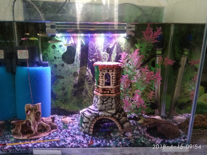 Как я аквариум заводил часть 3 Аквариумистика, Рак, Рыба, Аквариум, Длиннопост