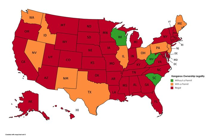 Карта легальности владения кенгуру в США Карты, Кенгуру, Легально, Штаты, США