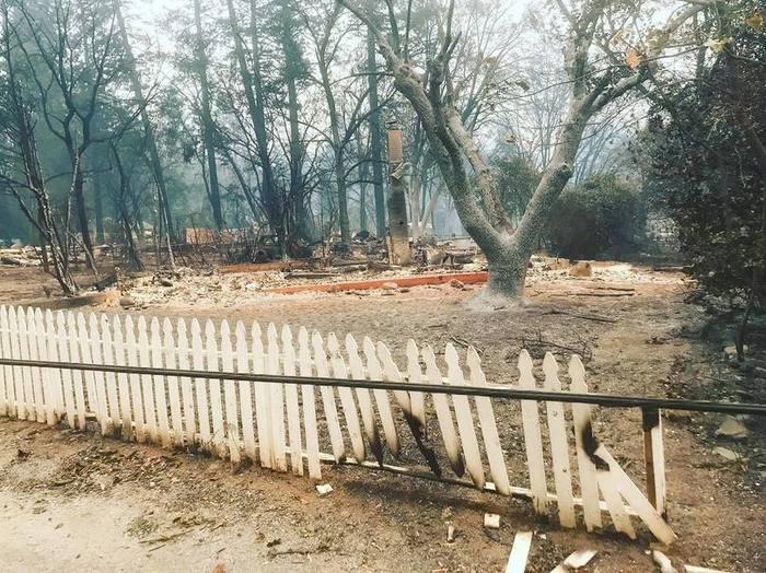 В Калифорнии кот месяц ждал своих хозяев на пепелище их дома Калифорния, Пожар, Длиннопост, Вертикальное видео, Кот, Видео