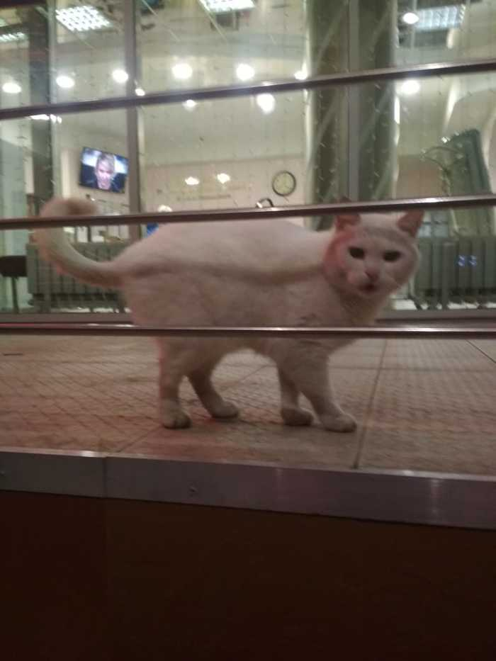 Котейка замерзает Кот, Помощь животным, Ищу дом, Москва, Без рейтинга, Длиннопост, Помощь