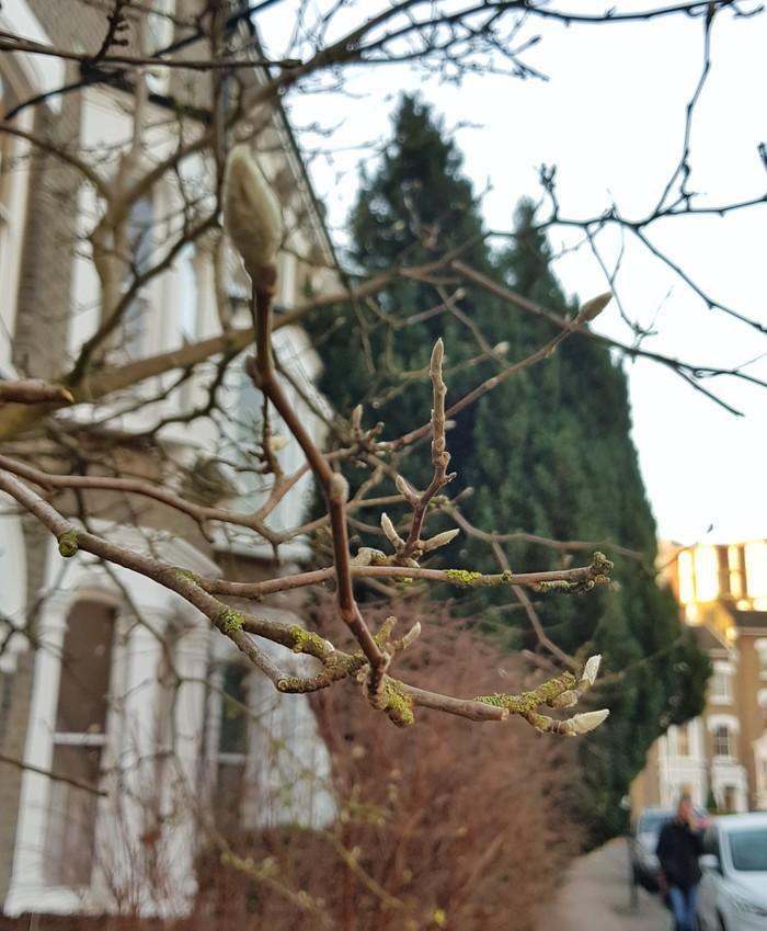 Необычный декабрь Природа, Англия, Необычное, Длиннопост, Почки, Фотография