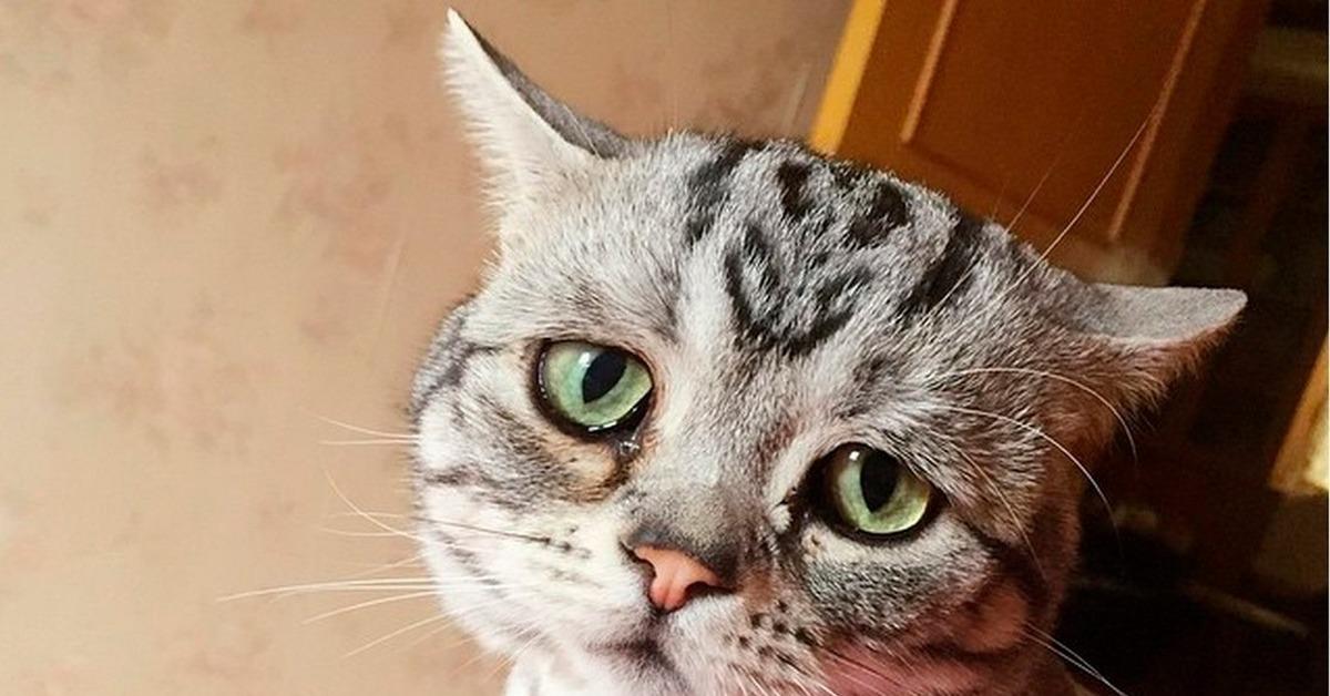 Картинки виноватая кошка, картинками