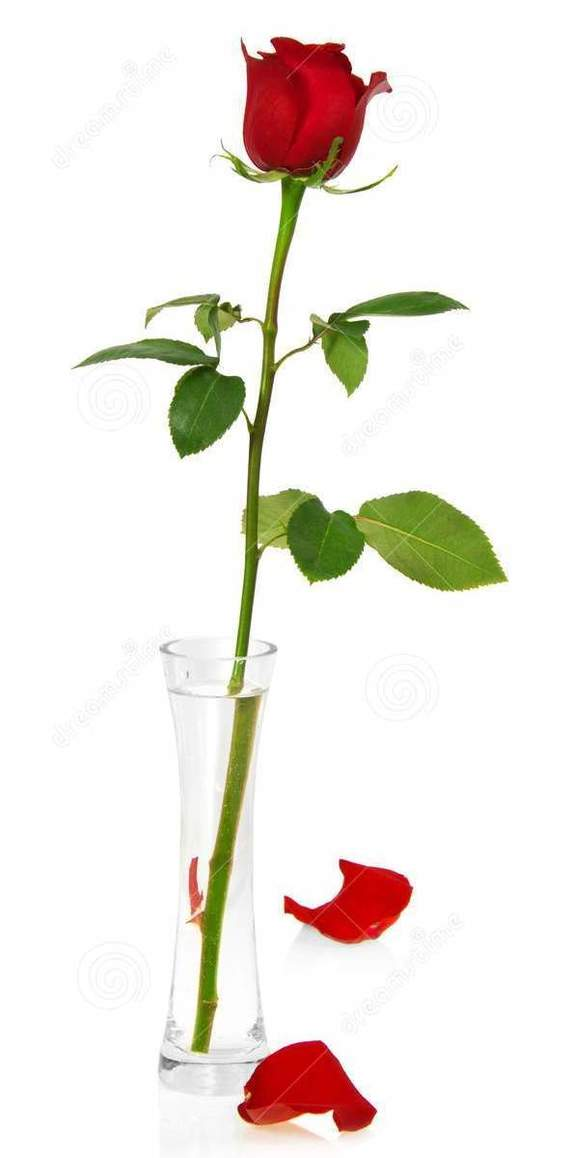 Как у меня роза росла Длиннопост, Роза, Выращивание, Цветы