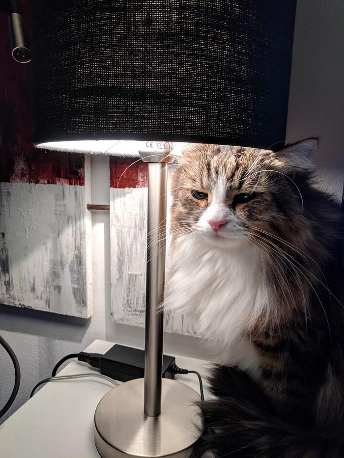 Мой кот с лампой