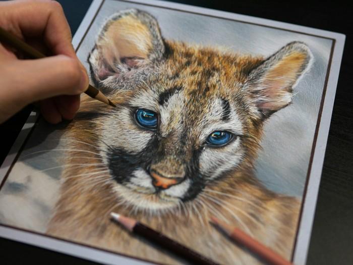 Рисунок цветными карандашами Цветные карандаши, Рисунок, Рисунок карандашом, Хищник, Гиперреализм, Животные, Пума, Анималистика