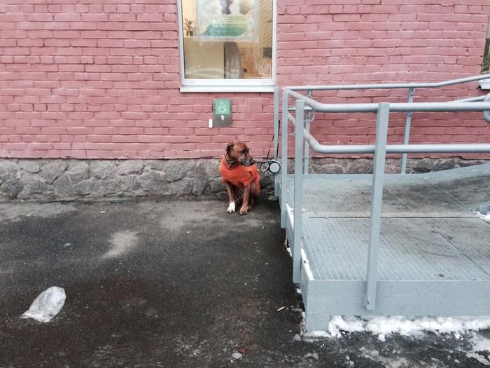 Пёс и Снежана Собака, Подворотня, Внезапно, Обои, Длиннопост