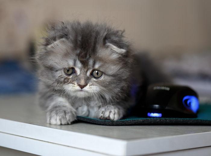 С мышкой...