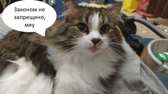 Кот нарушитель Кот, Пешеходы и водители, ПДД, Искусственный интеллект, Moral Machine, Длиннопост