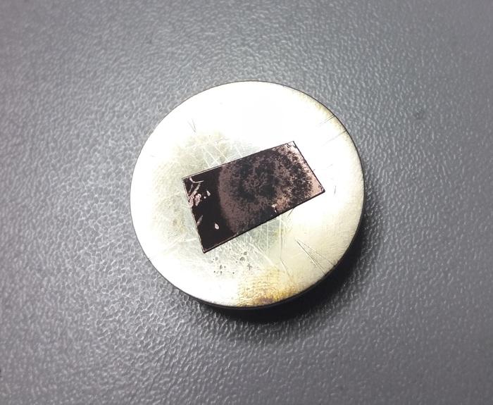 Плесень под электронным микроскопом Плесень, Интересное, Микромир, Длиннопост, Электронный микроскоп