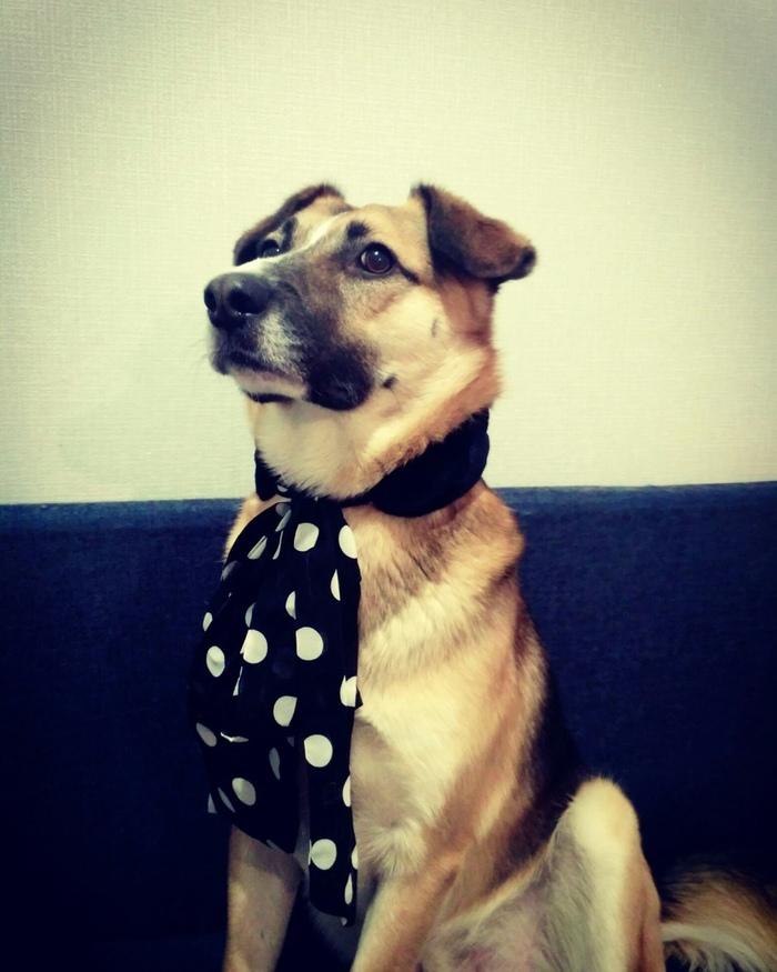 Защитник) Собака, Друг