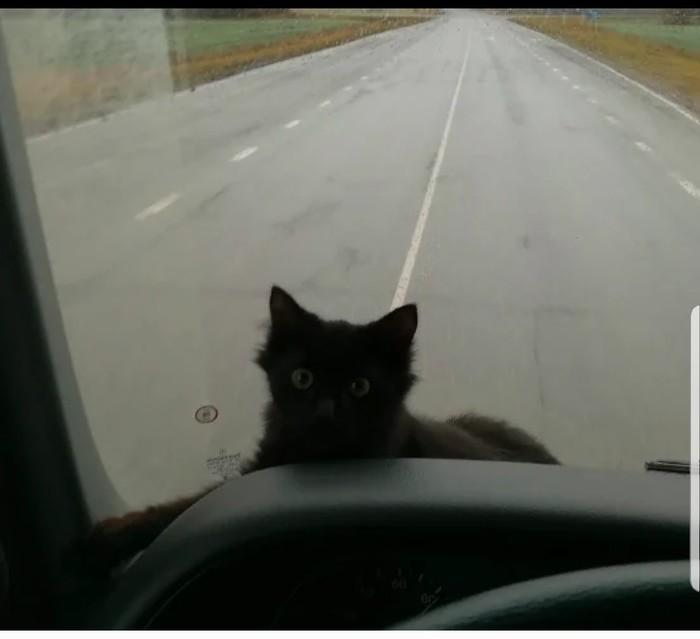 """Кошка-""""дальнобойщик"""" Дальнобойщики, Кот, Смоленск, Длиннопост"""