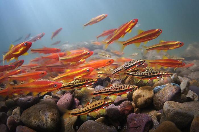Подводная съемка в Южных Аппалачах
