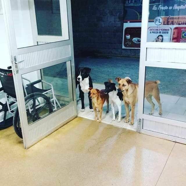 Человеки и собаки. Собака, Бездомные