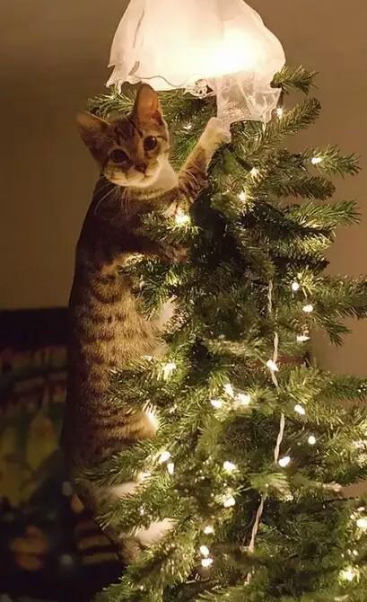 Напоминалка. Кот vs Елка Кот, Новогодняя елка