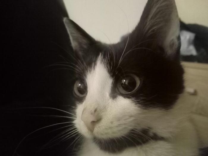 Котёнку срочно нужен новый дом Кот, Рига, Латвия, Бездомные животные, Ищу дом, Длиннопост, Без рейтинга