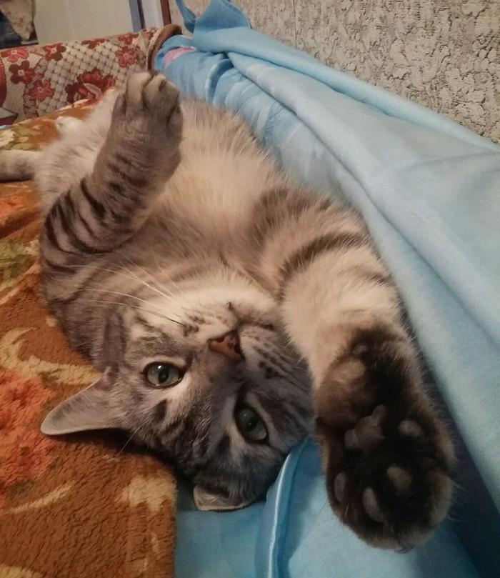 Когда кот нагло спит, а ты собираешься на работу... Котомафия, Кот, Доброе утро
