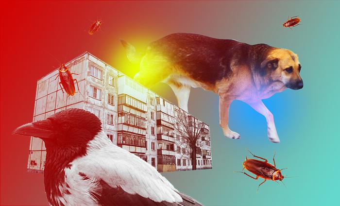 zlie-ptichki-v-podvorotne-erotika-nenasitnoy-zhenshini-film