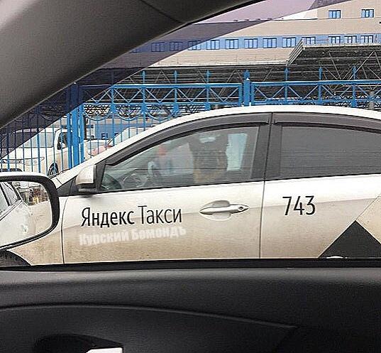 К вам подъедет хороший мальчик на белом Hyundai Solaris Курский бомонд, Яндекс такси, Хороший мальчик, Собака