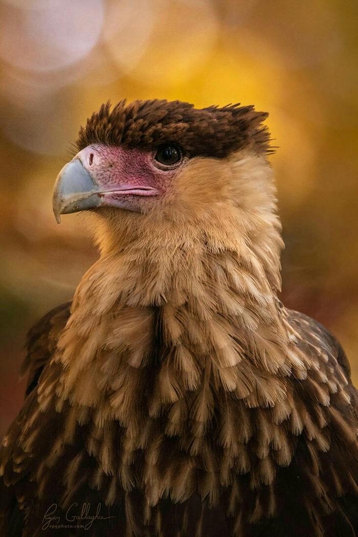 Говорят, что тут сова какая-то завелась? с Птицы, Хищные птицы, Фотография