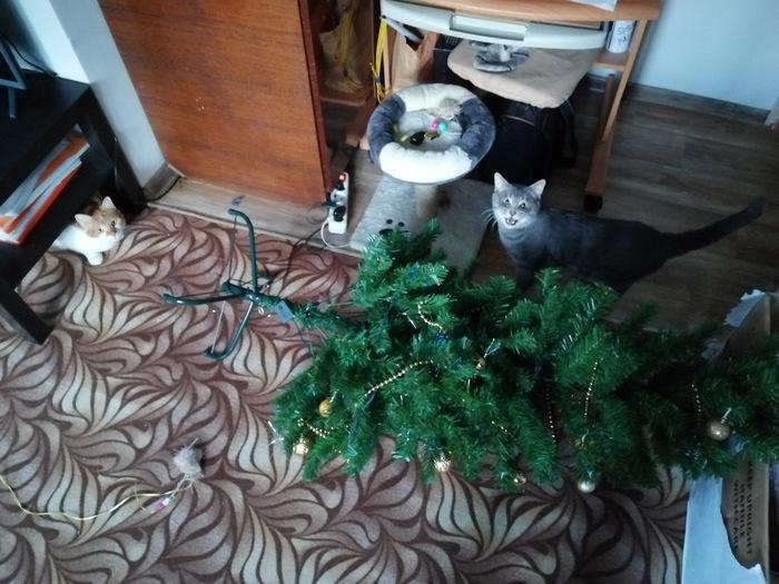 Миссия выполнена Кот, Новогодняя елка