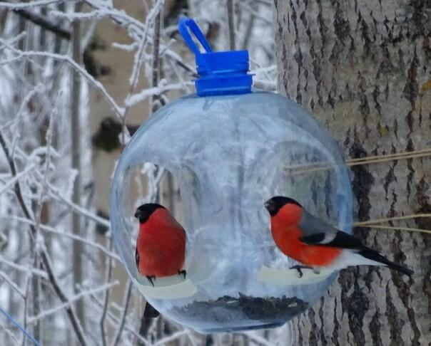 Красавцы Птицы, Снегири, Зима, Длиннопост