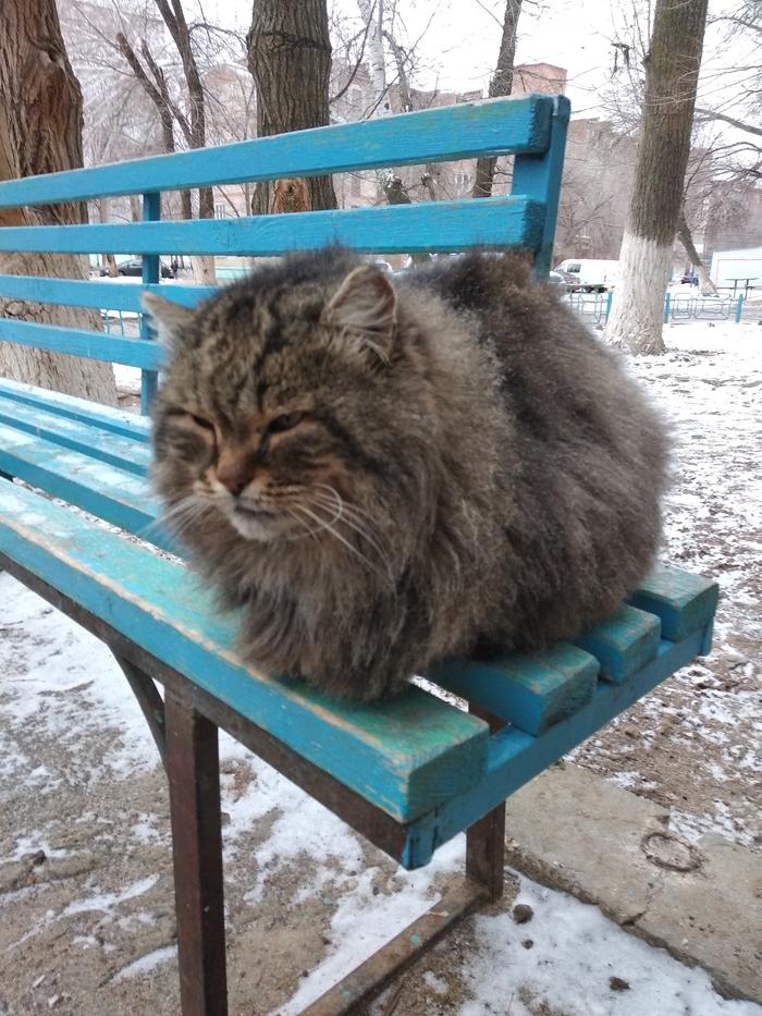 Зимняя шуба