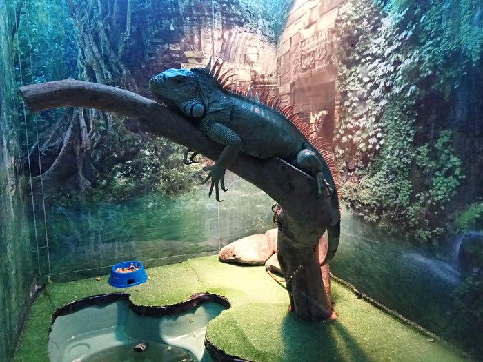 Экскурсия пикабушников в Челябинском зоопарке Челябинский зоопарк, Экскурсия, Длиннопост, Животные, Видео