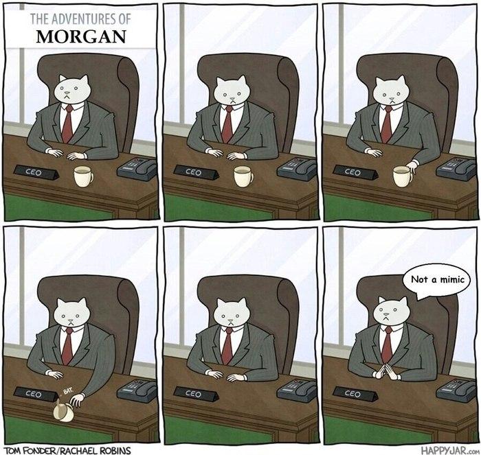Приключения кота Моргана