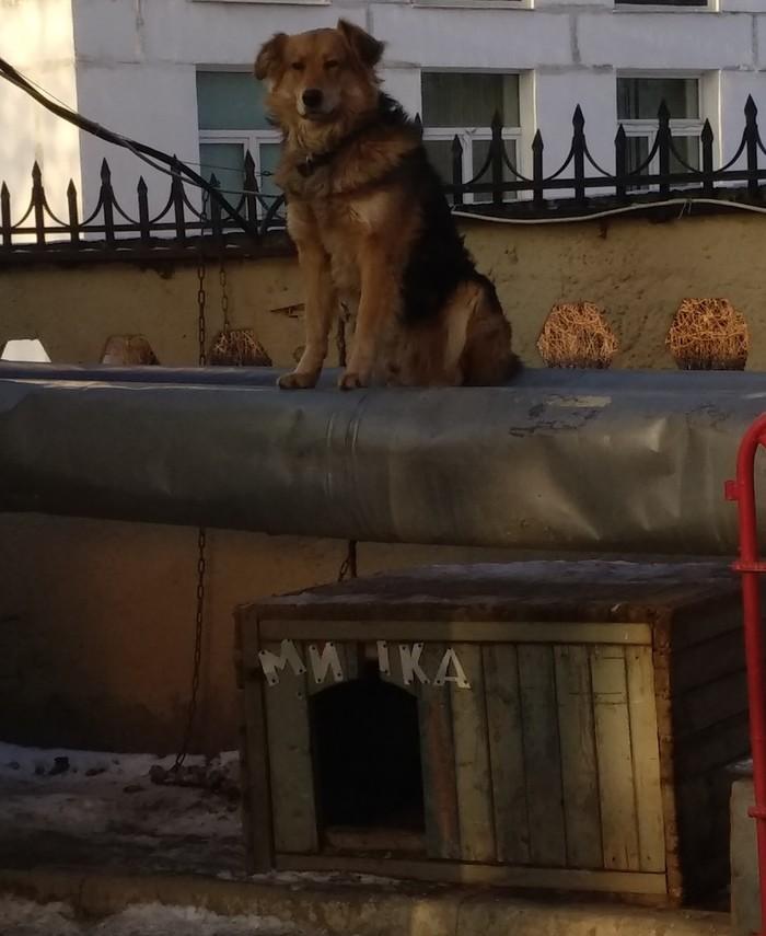 Высоко сижу! Далеко гляжу! Собака, Охрана, Охранник, Длиннопост
