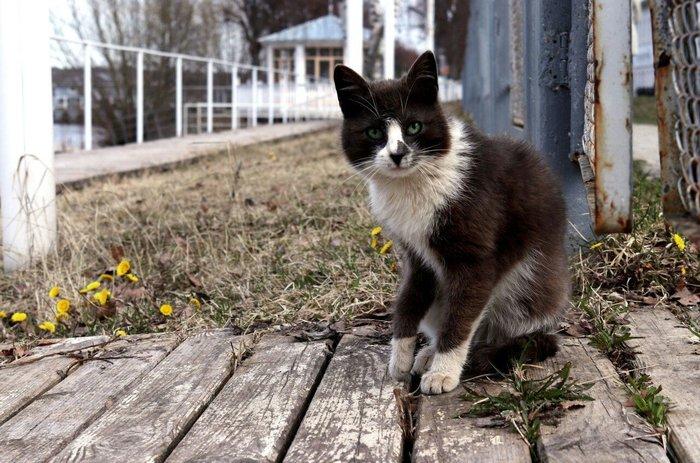 В России появился закон о защите животных Животные, Обращение с животными, Защита животных, Видео, Длиннопост