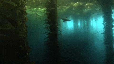 Подводный лес.