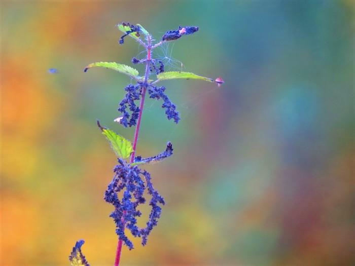Красота полей и жирный воробушек Цветы, Природа, Воробей, Лето, Деревня, Длиннопост, Фотография
