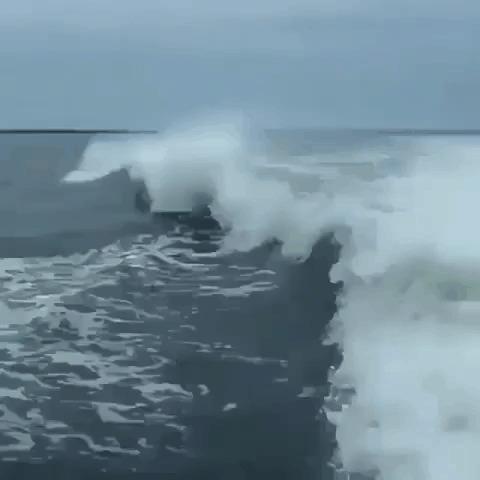 Выскочка... Дельфин, Конфликт, Гифка