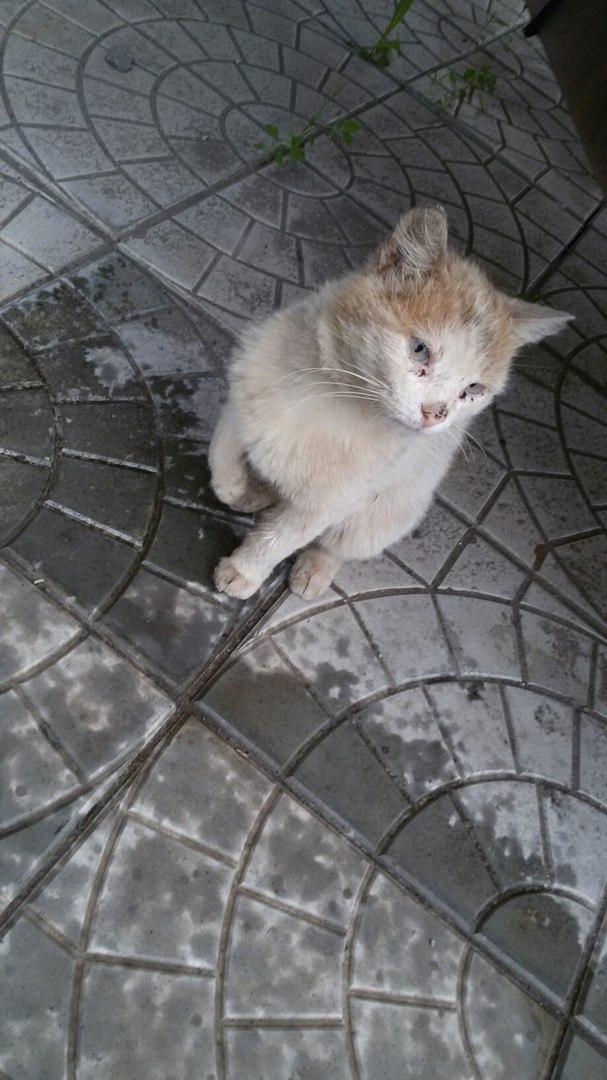Накаченная жопа у кота