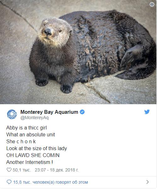 Работникам аквариума пришлось извиняться за то, что они назвали выдру «пухлявой киской» Выдра, Twitter, Янеумеювставлятьтвиты, Длиннопост