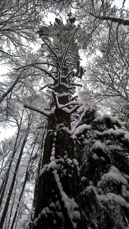 Зимний лес. Зима, Лес, Собака, Снег, Фотография, Длиннопост
