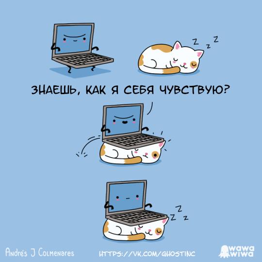 Zzz Комиксы, Перевел сам, Wawawiwa, Ноутбук, Кот