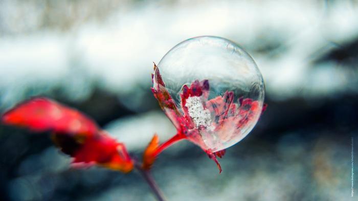 Мыльный пузырь Макро, Фотография, Макросъемка, Nikon, Nikon D60 kit, Начинающий фотограф