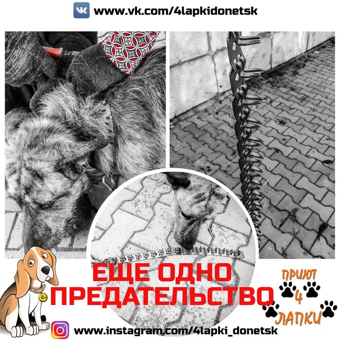 Хозяин был для него Богом... Приют, Приют для животных, Донецк, 4 лапки, Без рейтинга, Помощь животным, Собака, Собаки и люди, Длиннопост