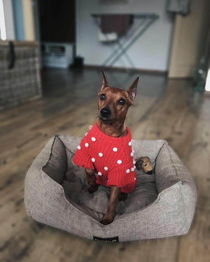 Собакена