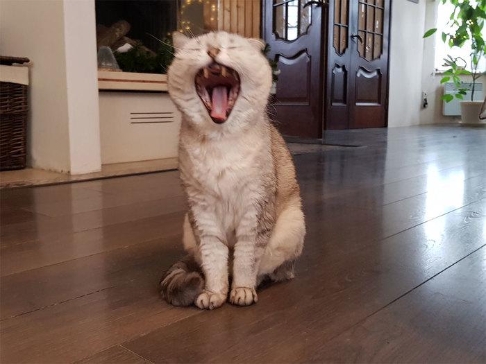 Пикабу, это Бесс. Бесс, это пикабу Кот, Домашнее