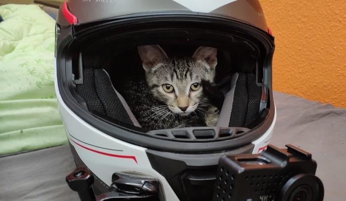 Мото-кот Кот, Мото, Шлем