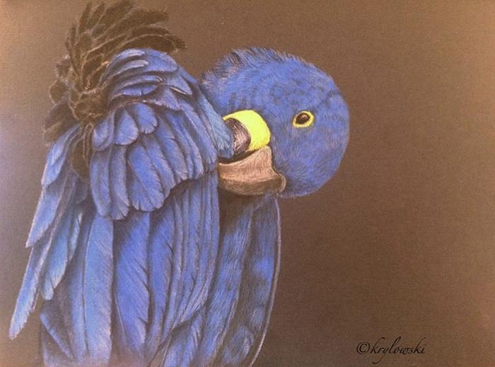 Пернатый рисунок. Животные, Попугай, Пастельные карандаши, Птицы, Арт, Природа, Ручная работа, Картина