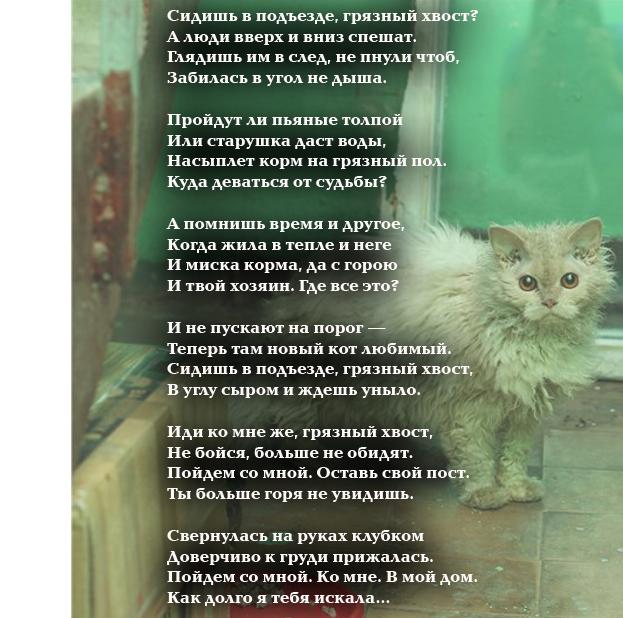 Стихотворение про бездомного кота.