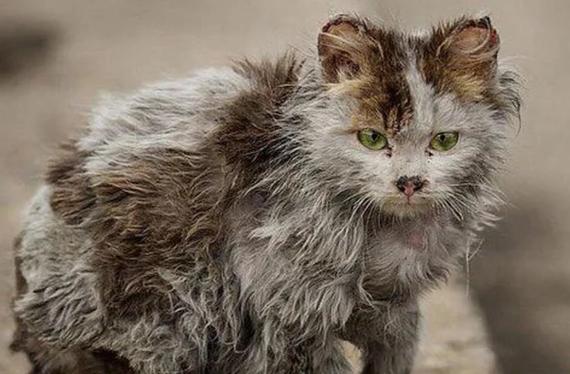 Кошка моей памяти, гуляющая под дождем.. Кот, Животные, Кошатники, Радуга, Без рейтинга