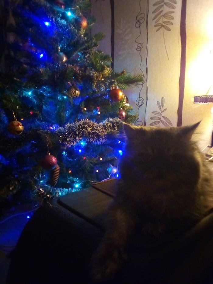 Новый год. Елочка. Коты.... Тока сегодня поставил елку, Кот, Новый Год, Новогодняя елка, Коварные кошки, Длиннопост