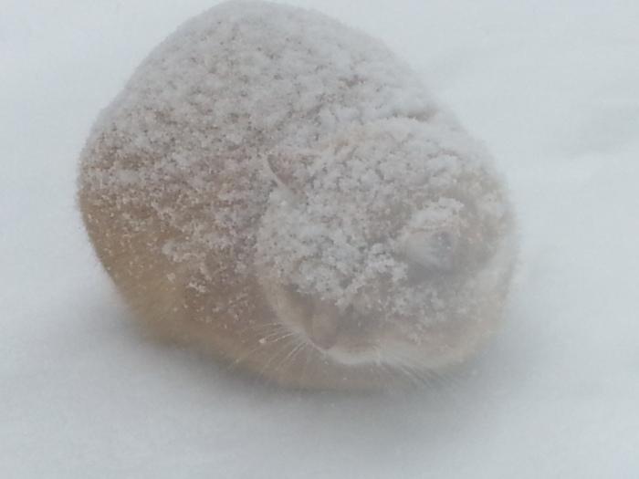 Кот-полярник Кот, Снег, Мороз, Холодно