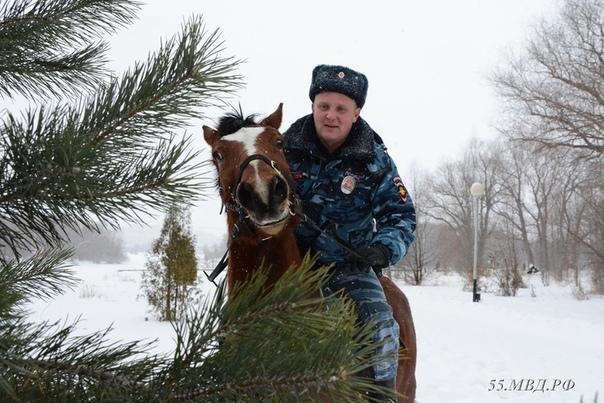 Позитивная полиция Полиция, Омск, Лошади