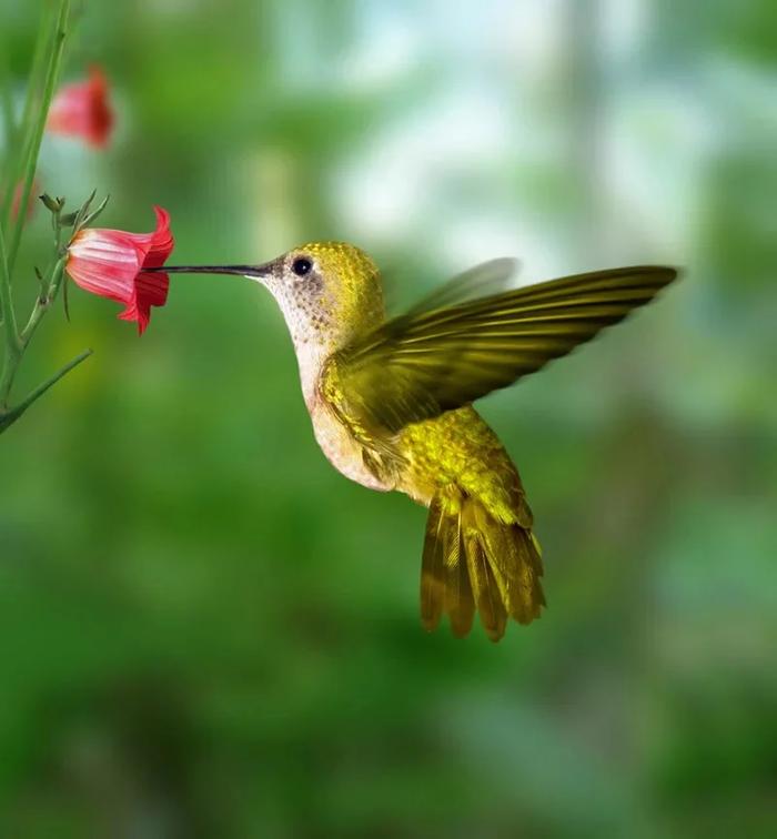Колибри: Невозможная птица Колибри, Птицы, Зоология, Юмор, Книга животных, Природа, Животные, Дикие животные, Длиннопост