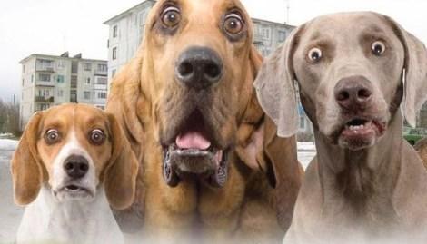 Налог на домашних животных: кошки и собаки влетят россиянам в копеечку Налоги, Россия, Госдума, Домашние животные, Собака, Люди и кошки, Текст, Закон, Длиннопост